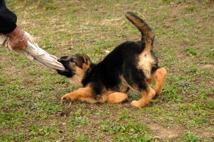 Dog Kennels Chichester