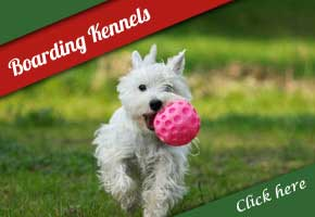 Dog Kennels in Amberley, West Sussex, UK